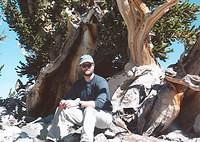 Sitting under a 3,000 year old Bristlecone Pine Tree